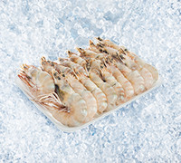 KUWAITI FRESH MEDIUM SHRIMPS